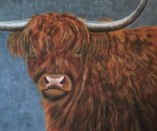 """(NIEUW) Te koop""""Schotse Hooglander""""100/120cm € 595,-"""